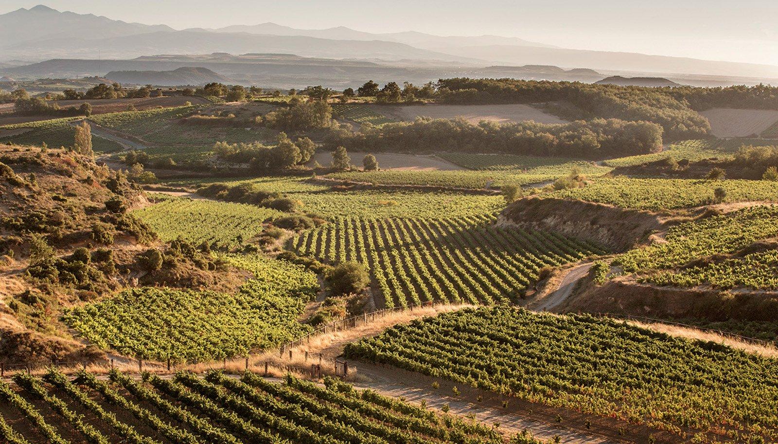 bodega y viñedo vistas DOCa Rioja