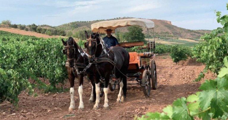 Enoturismo paseo carro a caballo en el hotel bodega Eguren Ugarte situado en Laguardia.