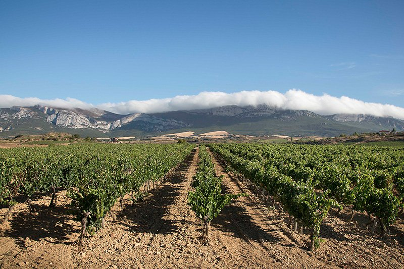 bodega y viña vistas sierra Cantabria