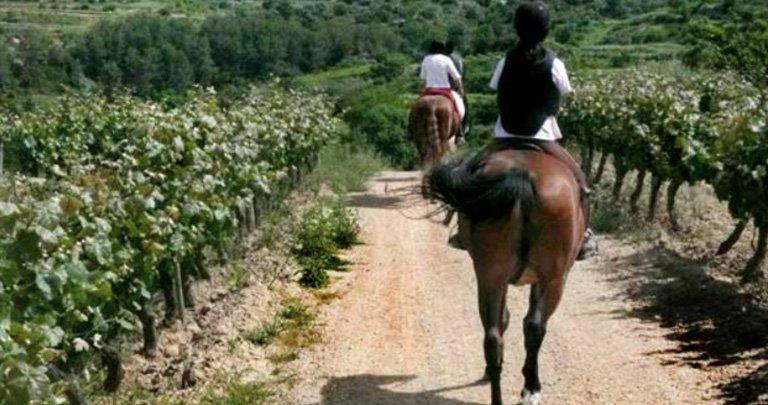 Enoturismo paseo a caballo en el hotel bodega Eguren Ugarte situado en Laguardia.